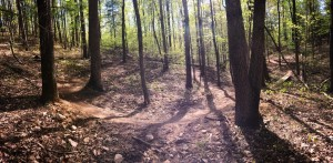 MSA trail through woods